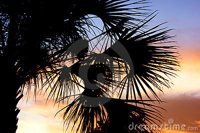 Palm tree silhouette with sunset
