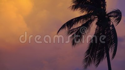 Palm Tree Silhouette vid Sunset Pink och Purple Sky Background med blixtljus Tomt kopieringsutrymme för text lager videofilmer