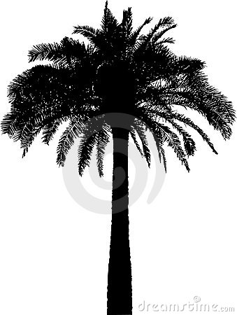 Palm tree silhouette on white