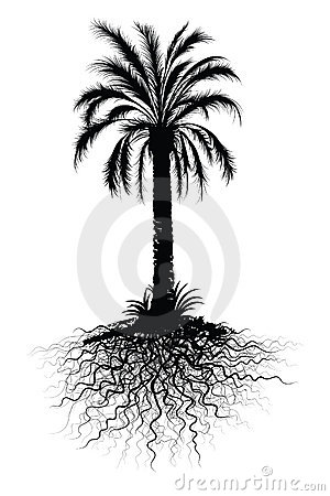 Palm tree sketch