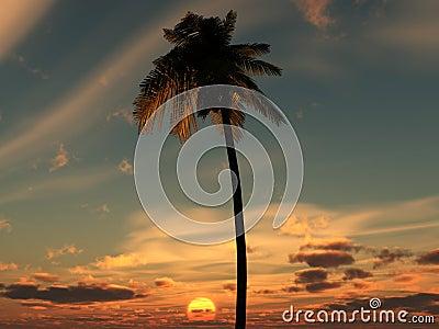 Palm Tree Sky 4