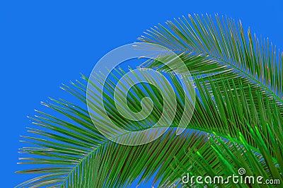 Palm-tree and sky