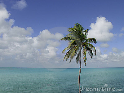 Palm Tree, Sky, Ocean