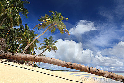 Palm tree stem on tropical paradise beach