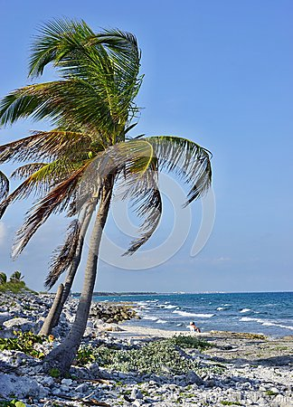 Palm tree on the stony seashore