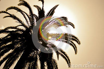 Palm Tree with the sun