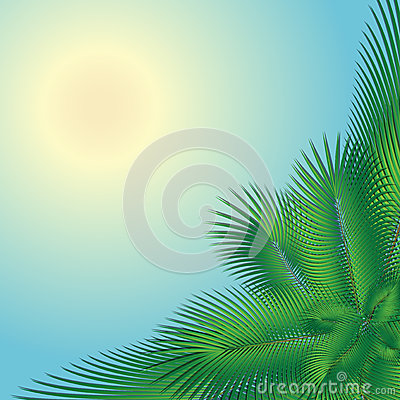 Palm tree and the sun