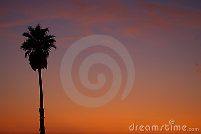 Palm tree at sundown