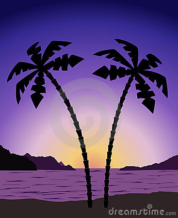 Palm tree at sunrise (sunset)