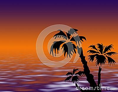 Palm tree on sunset