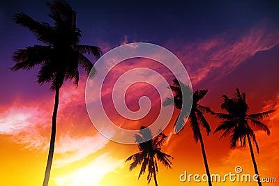 Palm tree sunset on beach