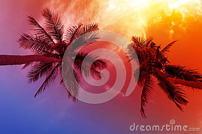 Palm tree sunset on beach