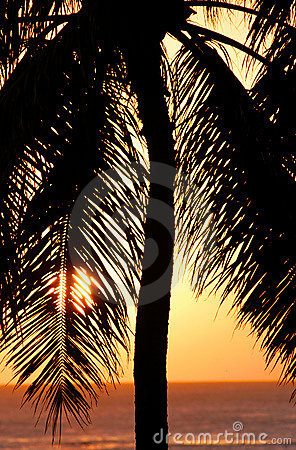 Palm Tree Sunset in Honolulu, Hawaii