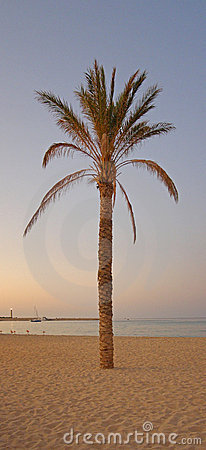 Palm tree sunset panorama