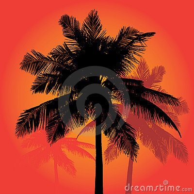 Palm Tree Sunset Silhouettes Vector