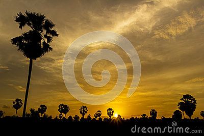 Palm tree on sunset