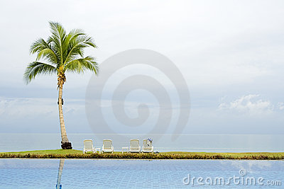 Palm tree by a swimming pool