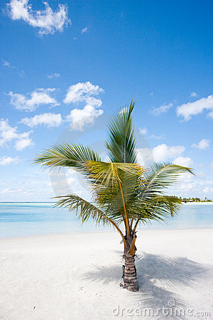 Palm tree on tropic beach