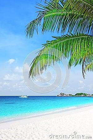 Palm tree in tropical beach
