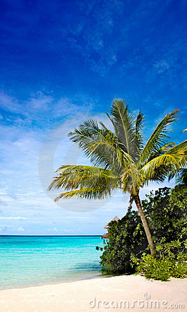Palm tree in a tropical beach