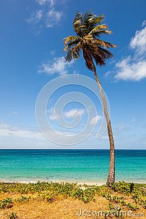 Palm Tree on Tropical Beach against Ocean