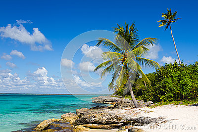 Palm tree on the tropical beach, Dominican Republic