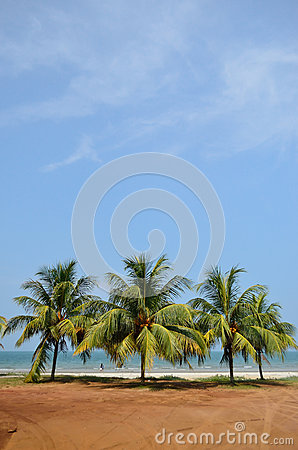 Palm tree on the tropical beach near sea