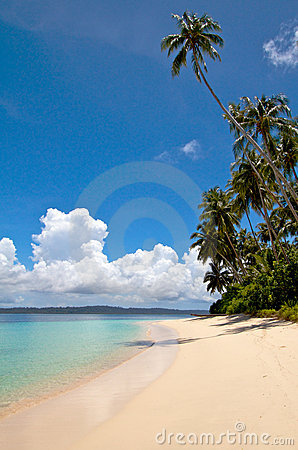Palm tree on tropical island beach