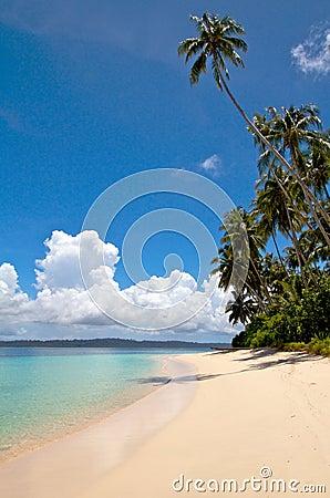 Palm tree on tropical island beach