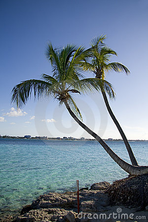 Palm tree tropical shoreline