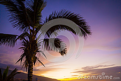 Palm Tree in a Tropical Sunset