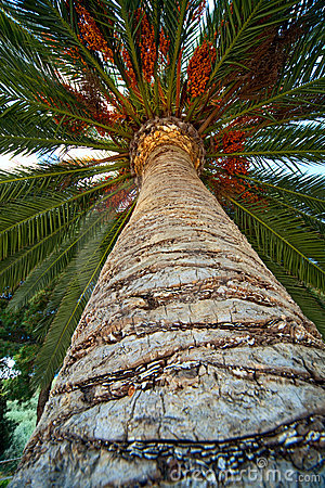 Palm tree trunk bark and leaf background