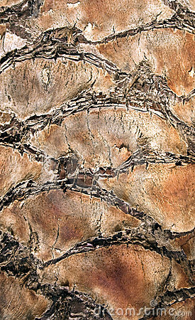 Palm tree trunk texture