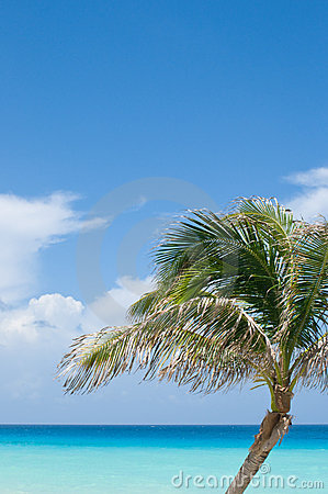 Palm tree, turquoise and blue tropical ocean