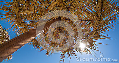 Palm tree umbrella