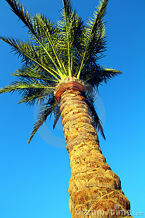 Palm tree under blue sky