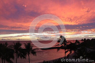 Palm Tree View During Sunset Free Public Domain Cc0 Image