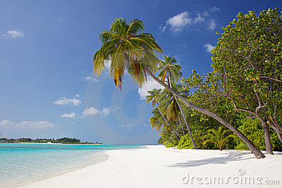Palm tree on a white sand beach