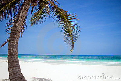Palm tree and white sand beach