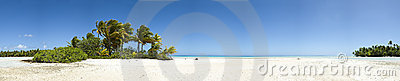 Palm tree and white sand beach panoramic view