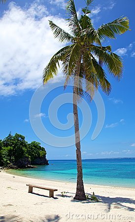 Palm tree on white sand tropical beach on Malapascua island, Philippines