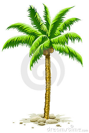 Free Palm Tree With Coconut Fruits Royalty Free Stock Photos - 10644948