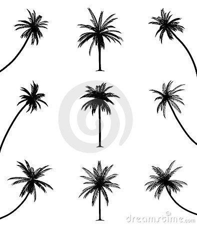 Free Palm Trees Stock Photos - 13954863