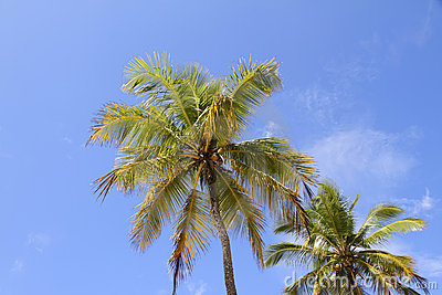 Palm Trees Royalty Free Stock Photo - Image: 18256445