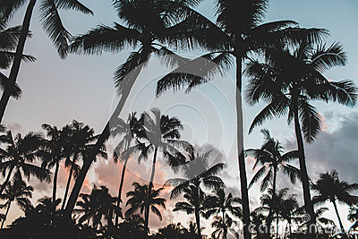 Palm Trees Against Setting Sun Free Public Domain Cc0 Image