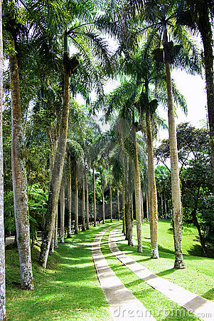 Palm trees alley