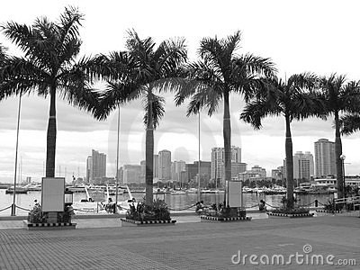 Palm Trees amidst the Manila Bay Skyline