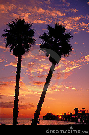 Free Palm Trees And Pier At Sunset Stock Images - 12646694