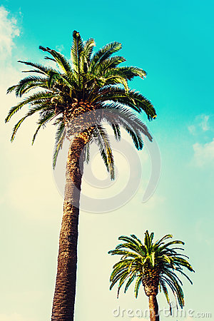 Free Palm Trees At Tropical Coast In Vintage Style And Film Toned Ag Royalty Free Stock Images - 63573099