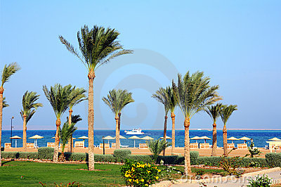 Palm Trees On Beach Stock Image - Image: 17287911